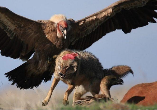 Desert Foxes Maintain Dominance Over Super Eagles