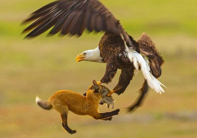 Eagles Vs Squirrels: When 'Animals' Battle For Human Competition