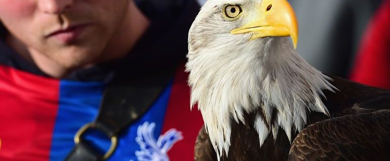 Kayla, Crystal Palace Eagle, Dies At 28 After Heart Attack