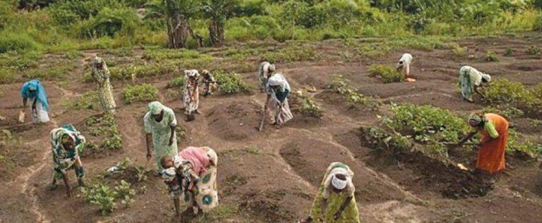 5 Million Farmers Register For Fertiliser Subsidy Across Nigeria