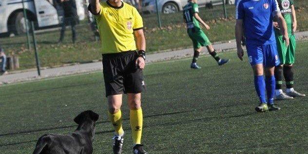 STRANGE: Dog Sent Off Over Pitch 'Invasion' In Serbia